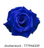 velvet blue rose on a white... | Shutterstock . vector #777946339