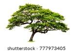tree on white background   Shutterstock . vector #777973405