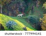 tiger in cabarceno natural park ... | Shutterstock . vector #777994141