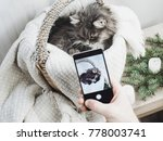 Stock photo sweet kitten in a wicker basket posing for a photo on a mobile phone 778003741