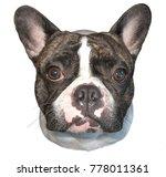 beautiful french bulldog. cute... | Shutterstock . vector #778011361