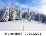 from the snow covered lawn... | Shutterstock . vector #778012231