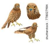 birds of prey set. vector...   Shutterstock .eps vector #778027984
