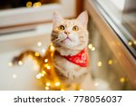 Stock photo cat and christmas lights cute ginger cat lying near the window and play with lights 778056037