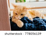Stock photo cat and christmas lights cute ginger cat lying near the window and play with lights 778056139