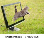 Stock photo blue tabby cat leaping out of a computer monitor onto green grass 77809465