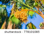 closeup of colourful dates... | Shutterstock . vector #778101085