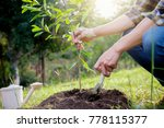 Planting A Tree. Close Up On...