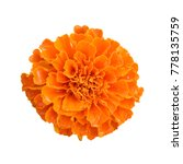 Beautiful Orange Marigold...