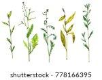 set of watercolor and ink...   Shutterstock . vector #778166395