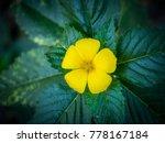 yellow flower on green... | Shutterstock . vector #778167184