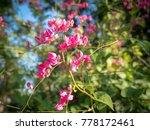 pink flower in green leaf...   Shutterstock . vector #778172461