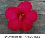 bright pink flower of purple... | Shutterstock . vector #778204681