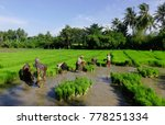 mekong delta  vietnam   sep 2 ... | Shutterstock . vector #778251334