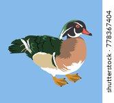 Wood Duck Vector Illustration ...