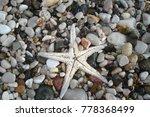 starfish shell on beach in... | Shutterstock . vector #778368499