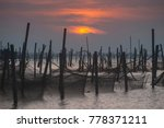 fish cage in water at sunset.... | Shutterstock . vector #778371211