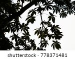 shadow of leaf | Shutterstock . vector #778371481