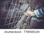feeding vietnamese pigs and... | Shutterstock . vector #778400134