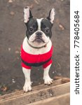 french bulldog white and black... | Shutterstock . vector #778405684