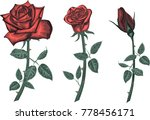 res roses   vector set | Shutterstock .eps vector #778456171