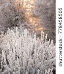Small photo of Christmas fairy tale snow scenary. Winter cloudy landscape with frost on branches of the trees. A dramatic hoary bush and big trees on he background
