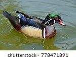 male wood duck or carolina duck ... | Shutterstock . vector #778471891