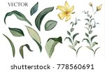Stock vector vector big set botanical elements wildflowers herbs leaf collection garden and wild foliage 778560691