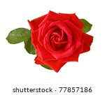 Stock photo red rose isolated on white 77857186