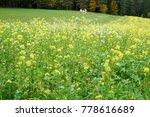 autumn in forest and corridor... | Shutterstock . vector #778616689
