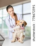 veterinarian giving injection... | Shutterstock . vector #778672591