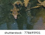 Many Young Crocodiles....