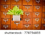 Small photo of Tree on Open wooden cabinet boxes in Library or Filing archive reference card catalog. Knowledge base and education concept, Selective focus