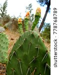 Small photo of Cactus close up in the Constitution 1857 National Park, located in the pine forests of Sierra de Juárez mountain range in the northern part of Baja California, Mexico.