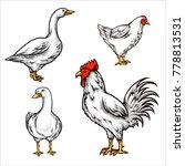 vector illustration of chicken... | Shutterstock .eps vector #778813531