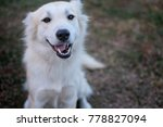 the white dog smiles  so cute... | Shutterstock . vector #778827094