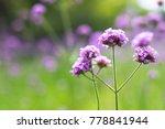 Closeup Flower Photographed A - Fine Art prints