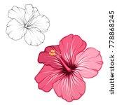 hibiscus beautiful blooming... | Shutterstock .eps vector #778868245