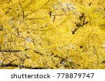 beautiful maple leaf | Shutterstock . vector #778879747
