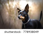 Small photo of Cute pinscher in winter forest