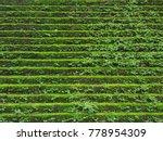 green moss growing on old brick ... | Shutterstock . vector #778954309