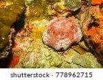 starfish on a reef near kot tao ... | Shutterstock . vector #778962715