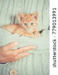 Stock photo cute little red kitten is sitting on his hands kitten in the hands red haired kitten soft tone 779013991