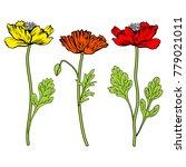 poppy flowers  bud  leaves... | Shutterstock .eps vector #779021011
