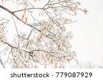 tilia flowers orange in the