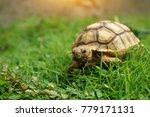 close up african spurred... | Shutterstock . vector #779171131