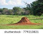 the big orange termite mound... | Shutterstock . vector #779213821