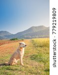 Small photo of Brown adorable smart dog sitting in pleasant farm field country road with grass and mountains added ambient light