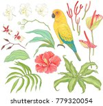 collection of tropical hand... | Shutterstock .eps vector #779320054