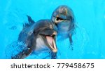 dolphins swimming in the clear... | Shutterstock . vector #779458675